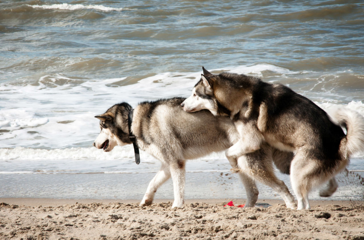 Dogs Mating Humans