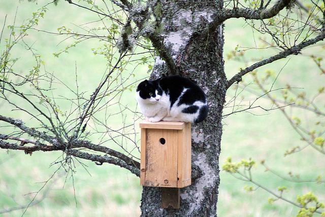 Don't let this happen or your bird feeder will not attract birds.   photo Jonas Löwgren