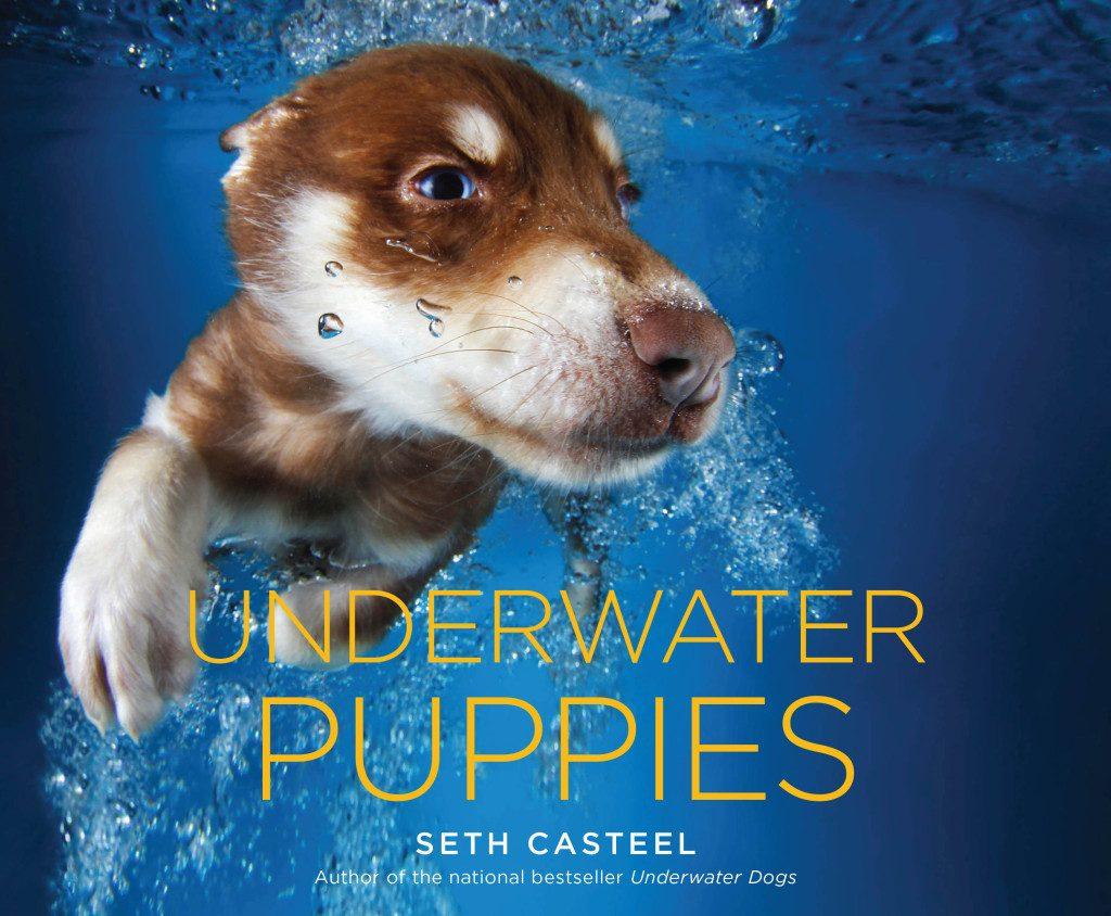 dogsunderwater